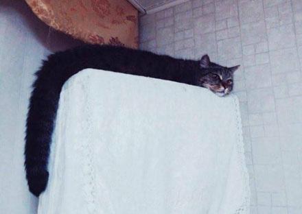 没见过世面的老师 我家里的猫就是这样子的(WWW.m2322.com)